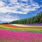 夏の北海道で英語と自然に触れる体験
